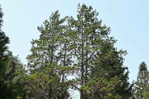 木の見分け方のポイント