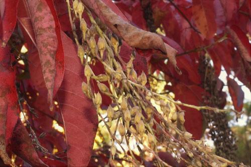 鈴蘭の木の実,おきしでんどろむ