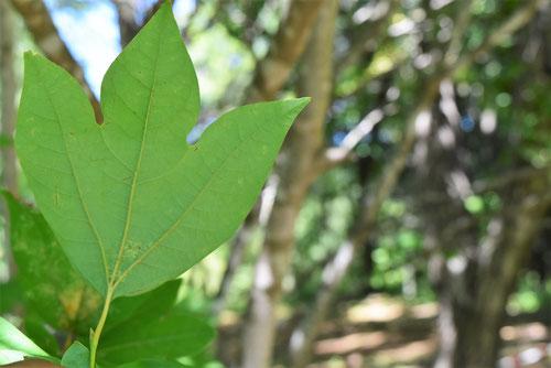白文字,樹木,葉っぱ