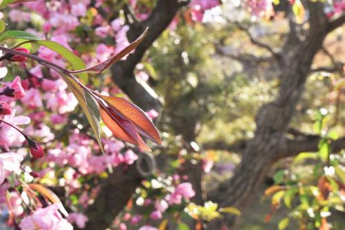 かいどうの木,葉っぱ