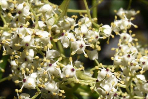 niwatoko,flower