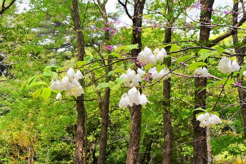 初夏に咲く花は