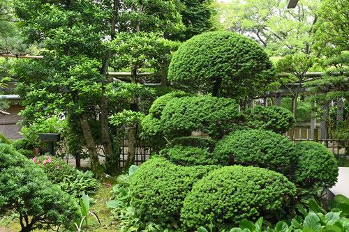 キャラボク 庭木図鑑