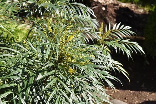 アジアンな植木