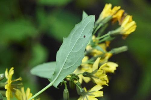 黄色い花が咲く草花