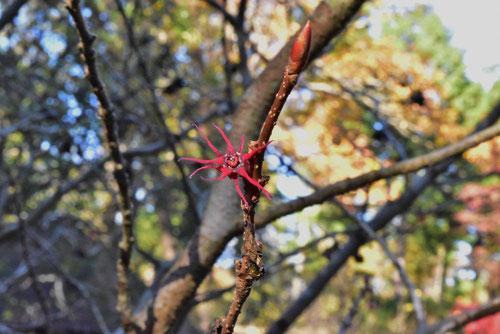 丸葉の木,花,画像