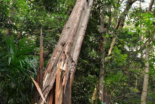 檜の木,台風