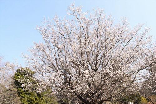 杏 木 画像