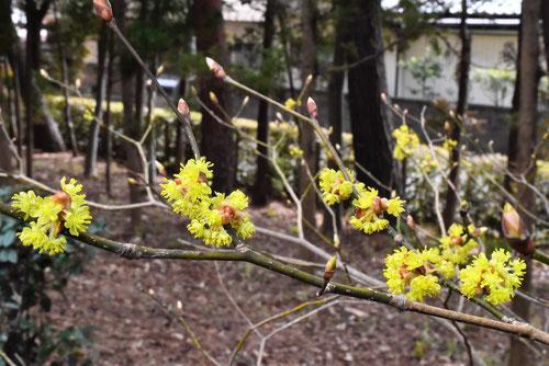 壇香梅,樹木