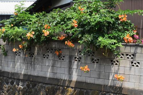 オレンジの花,何,のうぜんかずら