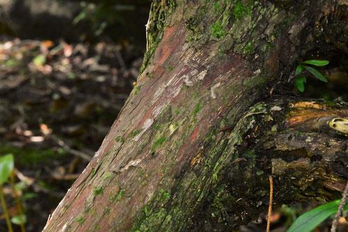 しんぱく,木
