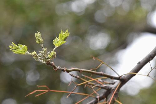 オウチ 木