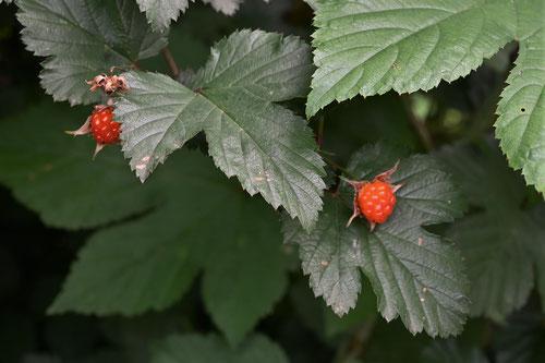 木苺の果実