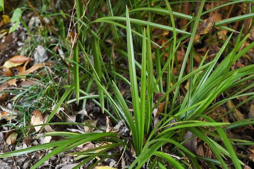 ジジーババーの草