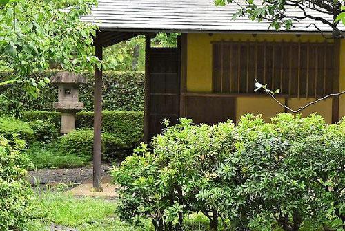 Japanese garden trees