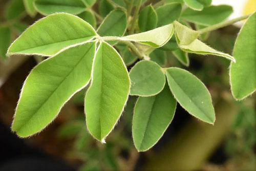 葉っぱ,画像,シンボルツリー
