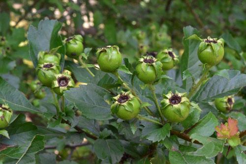 fruits of Mayflower