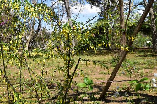 トゲ(棘)がある木