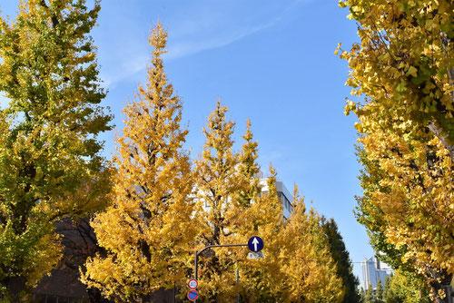公園樹,イチョウの木