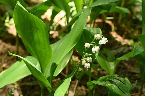 花が咲く時期