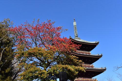 赤い実,上野東照宮