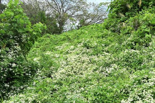 甘い香りがある白い花