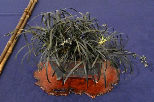 葉が黒い植物