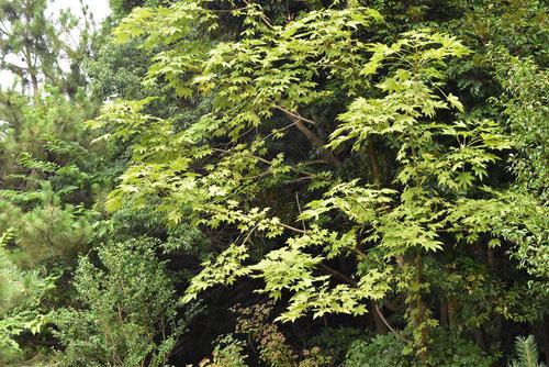 棘のある木