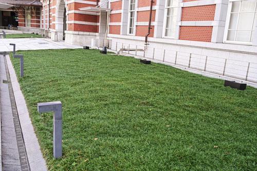玉竜と芝生