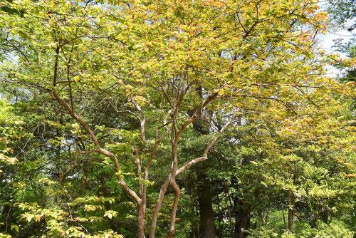 樹形,木の高さ