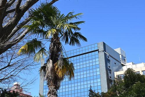 椰子の木みたいな植物