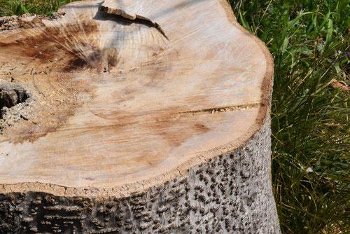 いいぎり 材木