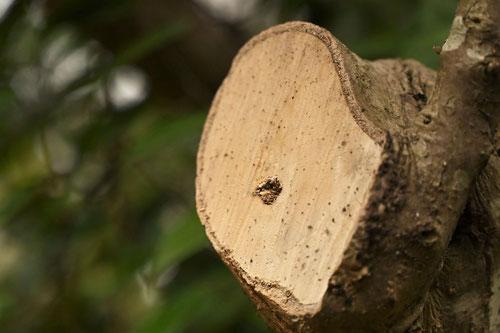 材質,木材