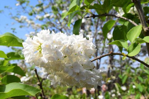 花の色 種類