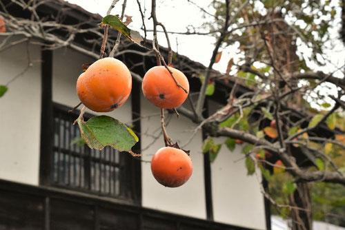 柿の木,樹木