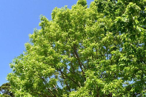 国木 樹木図鑑