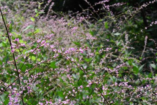 青紫色の花が咲く 季節