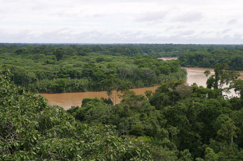 Rio Tambopata