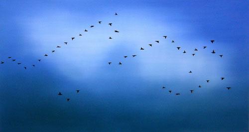 Vogelschwarm 4, 80 x 150 cm, Öl auf Leinwand, 2010