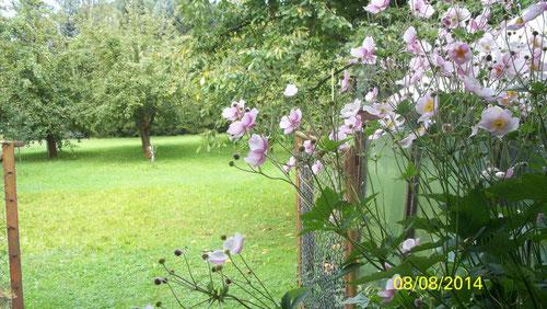 Der große Garten hinter dem Haus