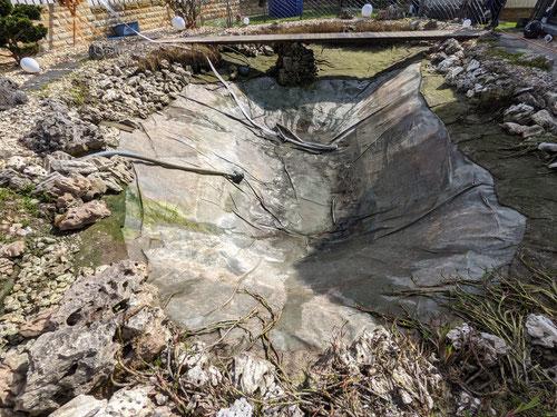 Ein gereinigter 56m³ Teich. Es wurden mehrere Tonnen Schlamm und ca. 3 Tonnen Steine aus dem Teich entfernt.