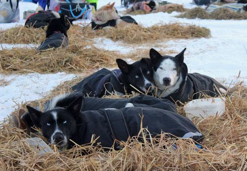 Ein Hundeklumpen: Jenna, Emil, Milka & Escala