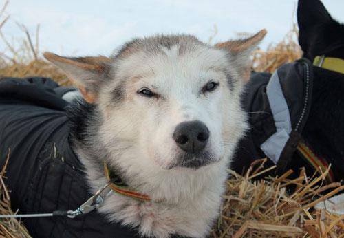 Emil von Superhund