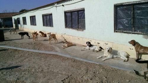 Einige Hunde aus Lleida genießen die ersten Sonnenstrahlen und warten sehnsüchtig auf ihre Menschen! Einfach draufklicken, dann sehen Sie unsere Auswahl!