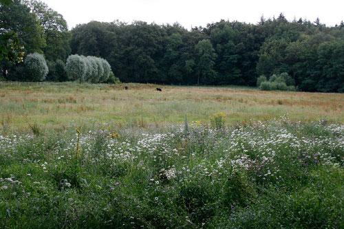 """Aktion"""" Kunterbunt"""" in der Dammer Schweiz. Hier entsteht in Kooperation von Landkreis, NABU, KURD und Naturschutzzentrum Dammer Berge ein Paradies für Pflanze, Mensch und Tier."""
