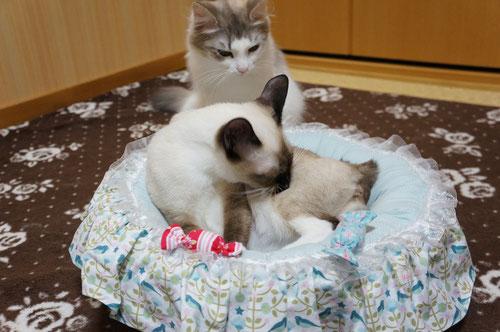 Mon ciel で作って頂いた猫ちゃんのベッド♪   リンクページからお店のホームページご覧いただけます(^_-)-☆
