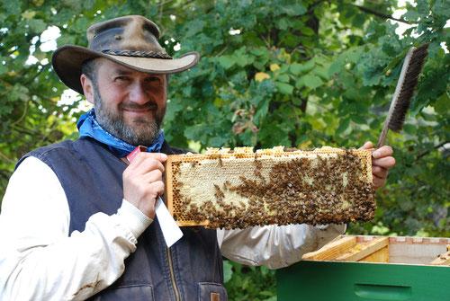 So sieht eine volle Wabe mit Heidehonig und ansitzenden Bienen aus.
