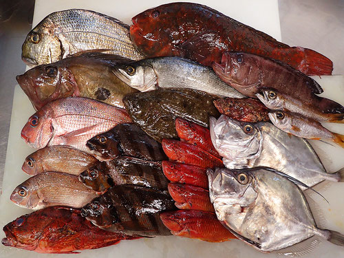 未利用魚 宅配寿司 出前 深海魚