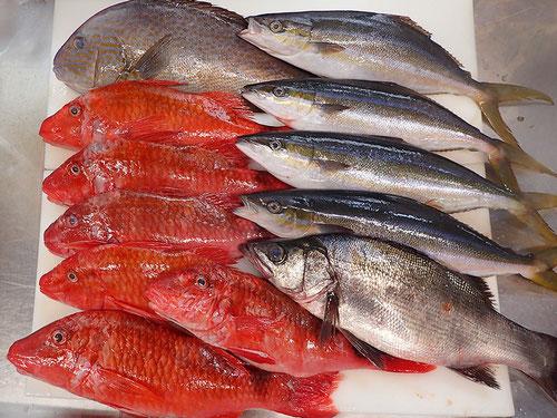 未利用魚など 宅配寿司