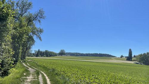 Kurz nach Bülach oberhalb des Sechtbachs.